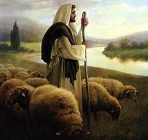 shepherd.2