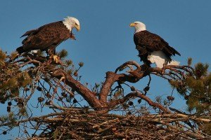 Eagles-Nest-building-3-9-047-1280x854