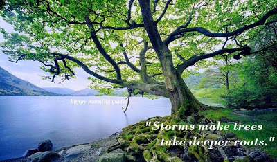 storms make roots deeper